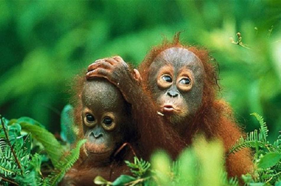 Private Day Trip to Bukit Lawang & Jungle Trekking