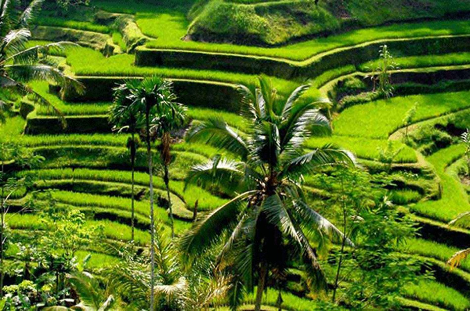 Private Tour: Waterfall in Ubud Full-Day Tour