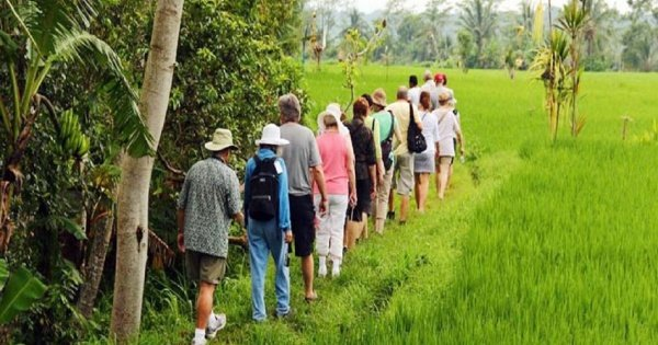 Rice Paddy Trekking Tours with Lunch from Ubud