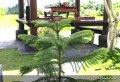 Soul Purification Journey to Tirta Empul Temple