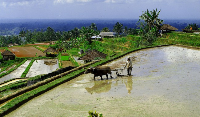 Enchanting Islands of Indonesia Tour