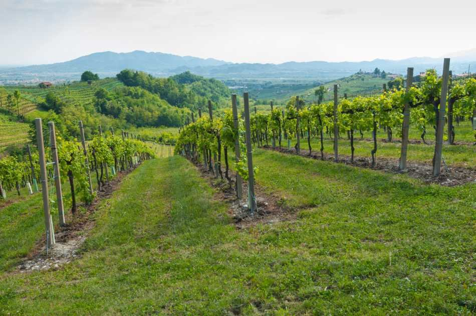 Prosecco Wine Road: Full Day Private Tour and Wine Tasting From Venice
