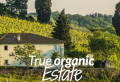 Yummy Tuscany! Food & Wine Tour in Chianti Landscape