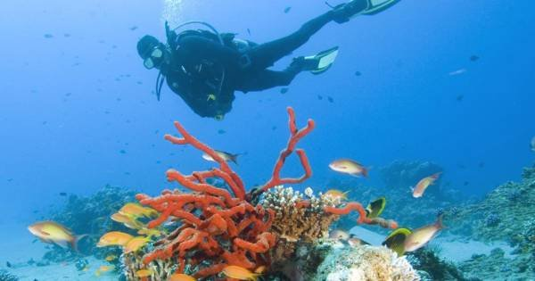 Experience Diving from shore 8 Days Private Tour