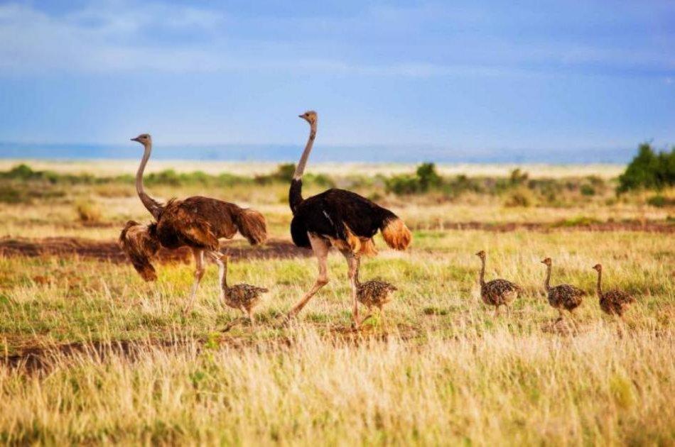 1 Days trip Amboseli Kenya budget safari tour package