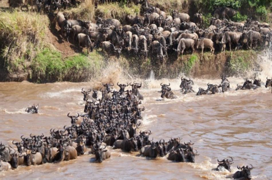 11 Day Kenya Safari and Beach Experience From South Africa