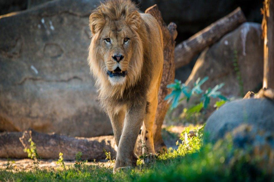 12 Day Kenya and Tanzania Experience Safari