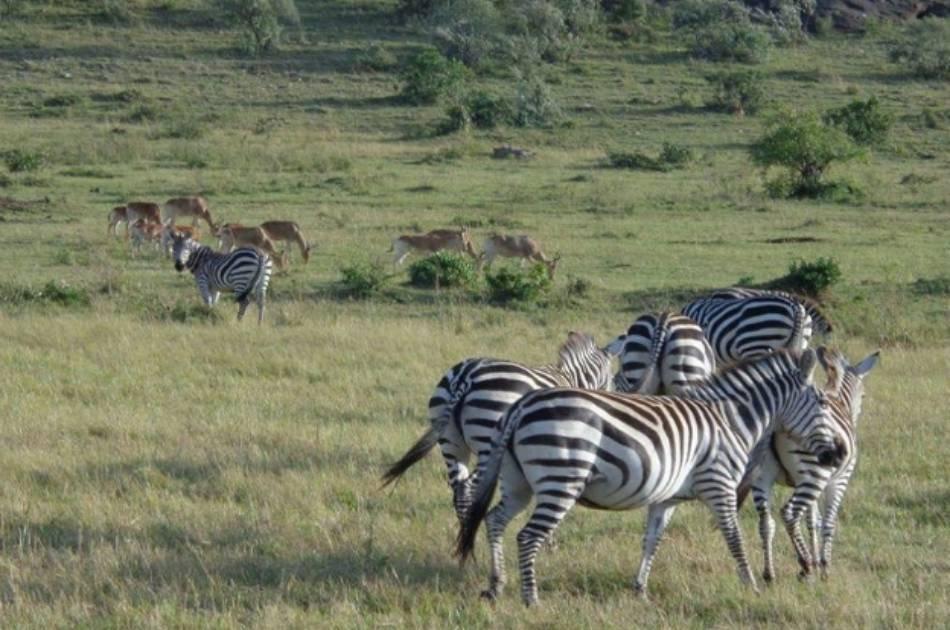 12 Day Kenya and Zanzibar Honeymoon Tour From South Africa
