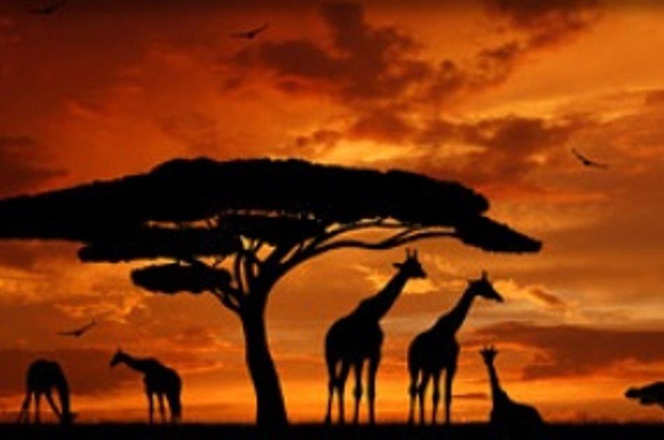 12 Days Best of Kenya & Tanzania