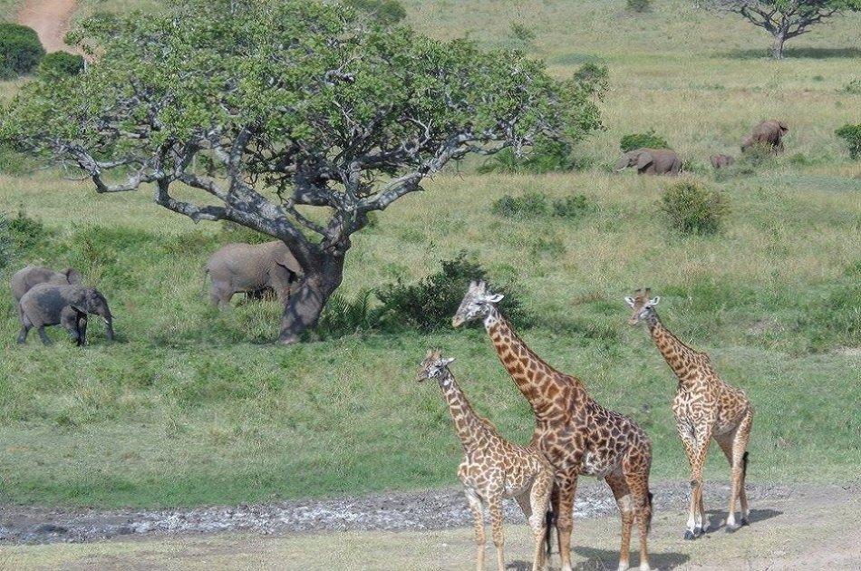 2 Days in Masaai Mara on Safari