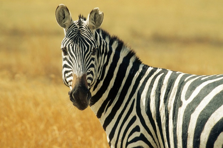 3 Day Amazing Amboseli Experience
