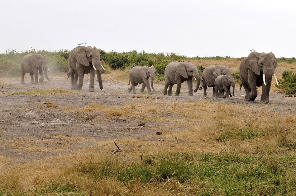 3 Day Amboseli National Park Safari