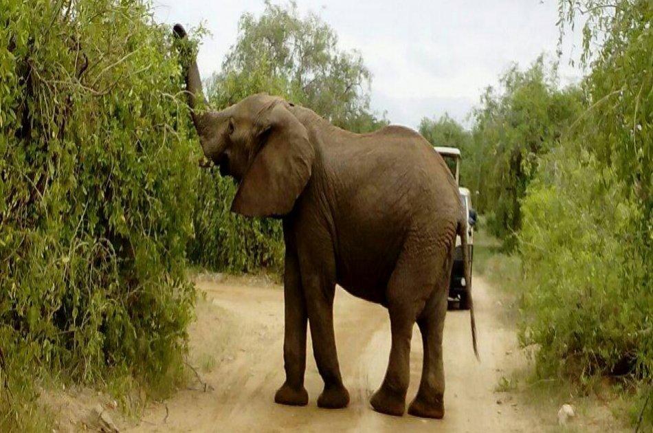 3 Day Maasai Mara Budget Safari From Nairobi