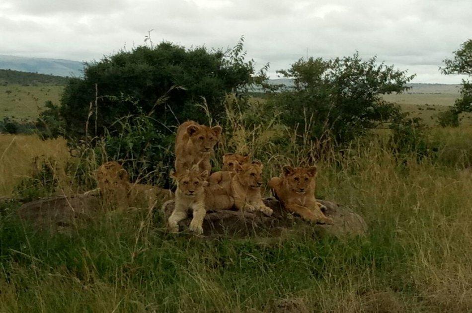 3 Day Maasai Mara Budget Safari