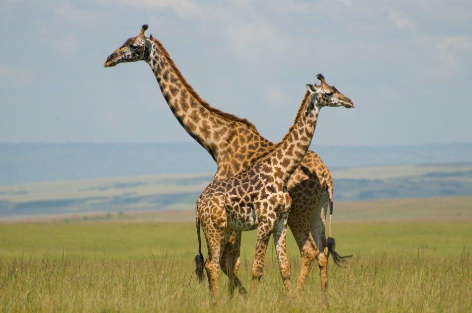 3 Days Kenya Camping Safari