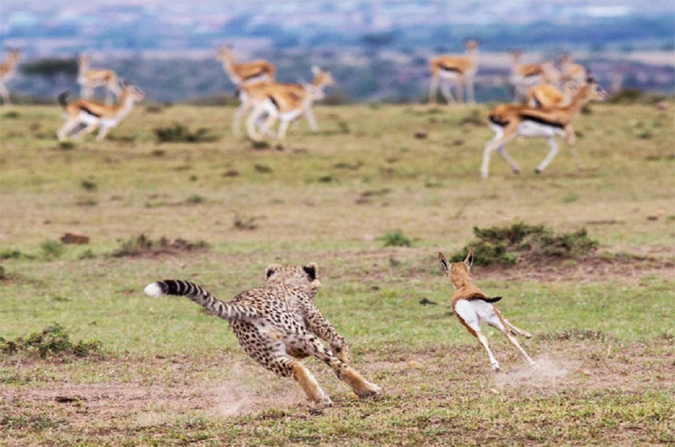 3 Days Masai Mara Safari Kenya