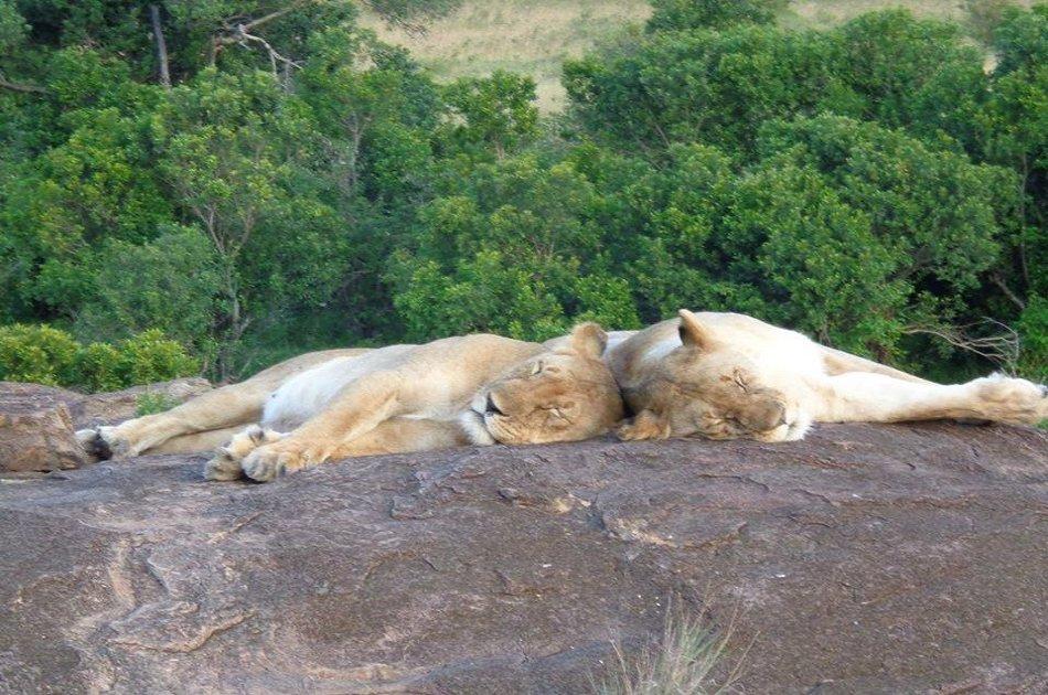 3 Days Safari in  Maasai Mara from Nairobi