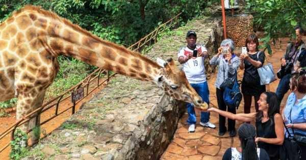 3 hour Tour of Karen Blixen Museum and Giraffe centre