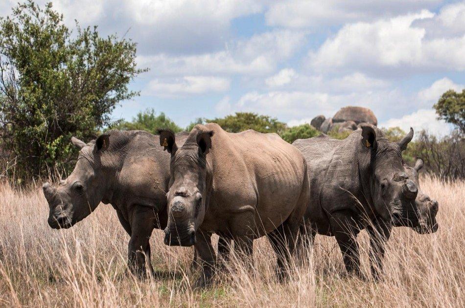 4 Day Amboseli, Tsavo East & West National Parks Safari