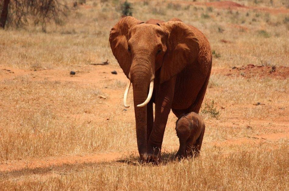 4 Day Majestic Masai Mara and Lake Nakuru Safari