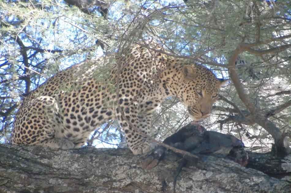 5 Days Big Five Kenya Safari