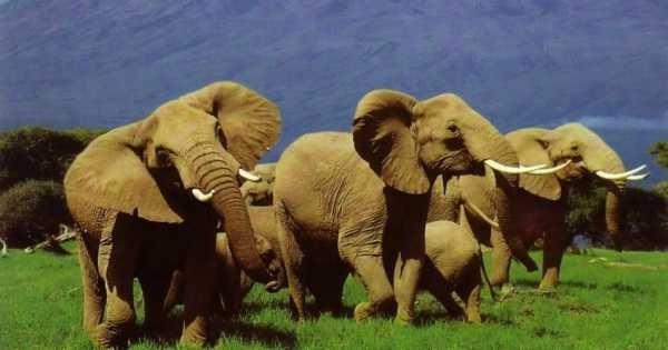 6-Day Masai Mara, Nakuru, Amboseli Luxury Safari