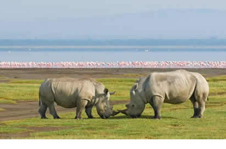 6 Days of Adventure on Kenya Camping Safari