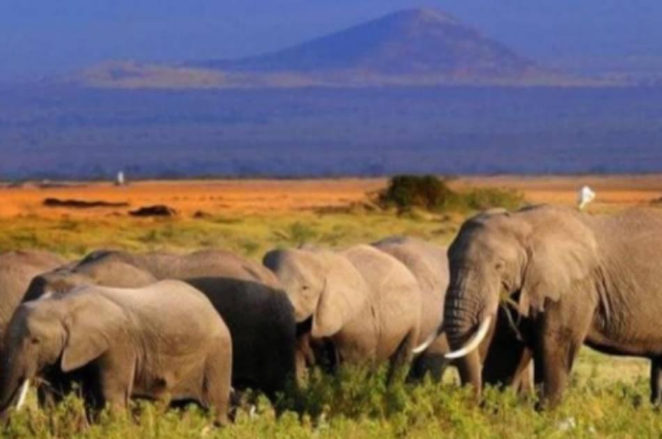 7 Day 2019 Wildebeest in Masai Mara and Lake Nakuru Safari From South Africa