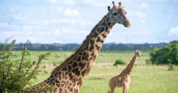 7 Day Luxury Kenyan Safari