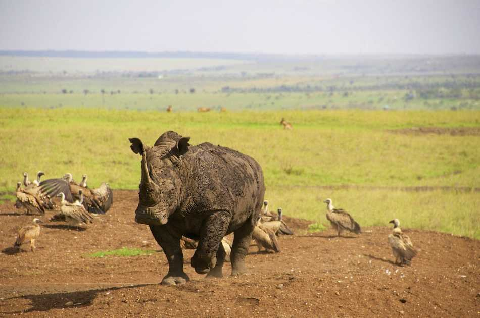 7 Day Luxury Kenyan Safari