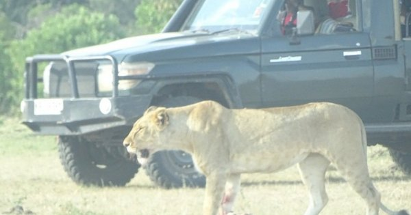 Amazing Masai Mara 3 Days 2 Nights Small Group  Safari from Nairobi