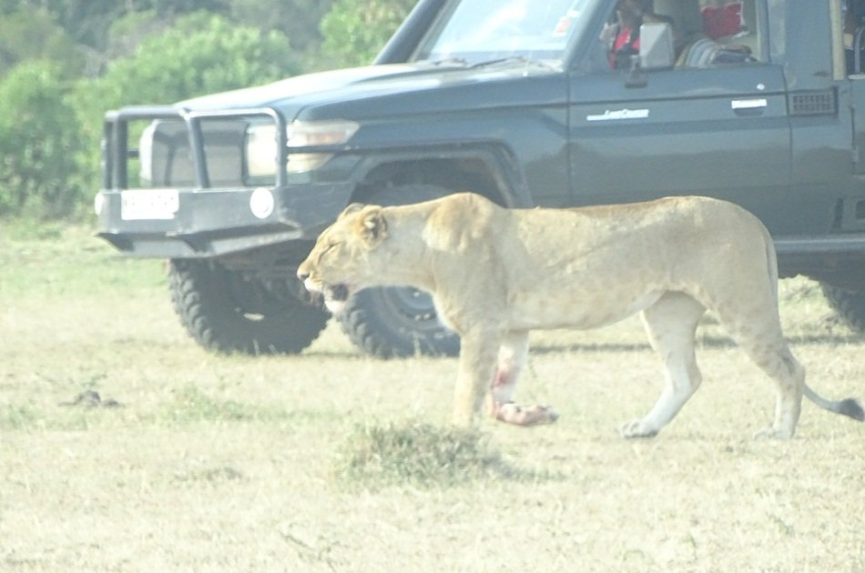 Amazing Masai Mara 3 Days 2 Nights Small Group  Safari from Nairobi