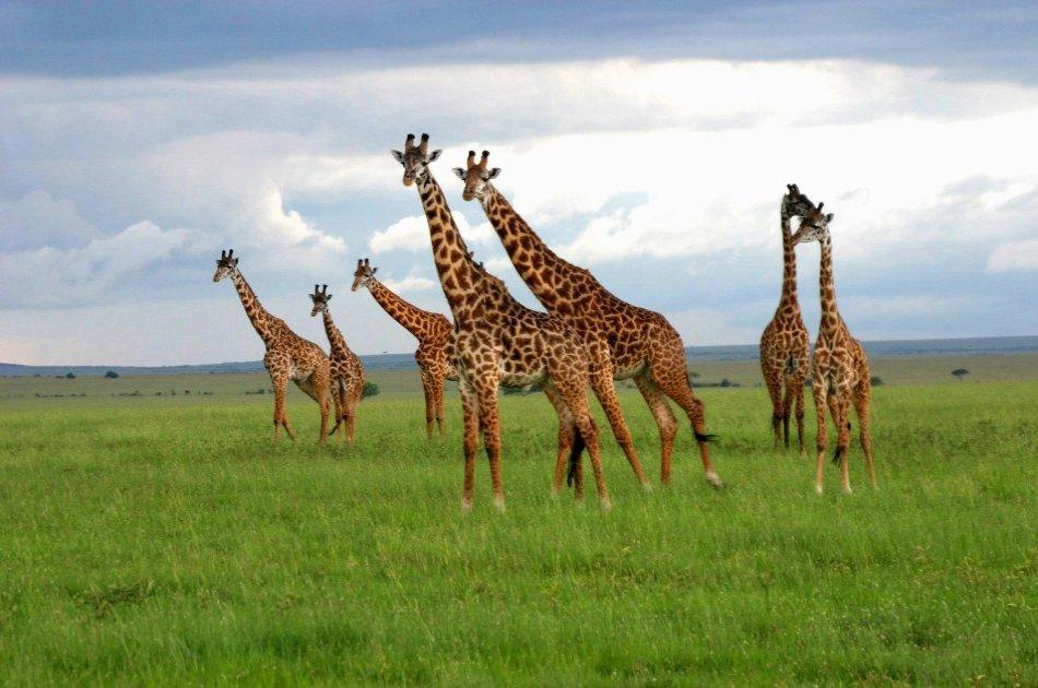 Day Trip Excursion  Lake  Nakuru National park