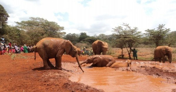 Elephant Orphanage and Giraffe Center Tour in Nairobi