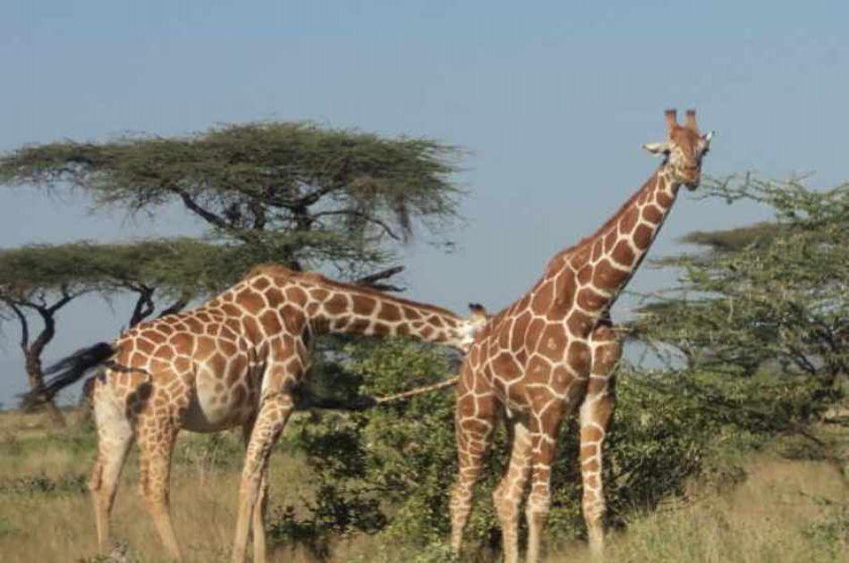 Elephant Orphanage and Giraffe Center Tour in Nairobi