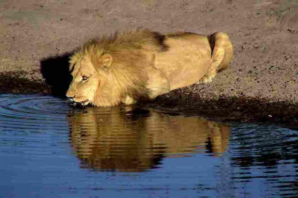 Exciting 3 Day Masai Mara Lodge Safari in Kenya