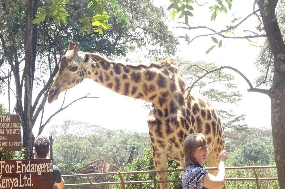 Exciting Full Day Tour of Nairobi Animal Orphanage, Elephant & Giraffe Centres