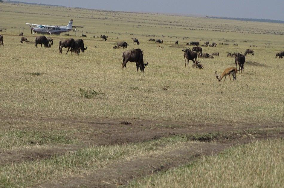 Flying Safari Package 3 Days 2 Night Masai Mara