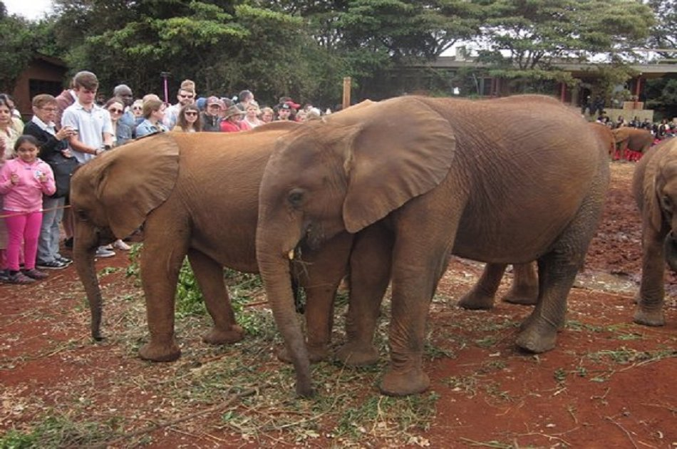 Half Day David Sheldrick Elephant Orphanage, Giraffe Center and Karen Brixen