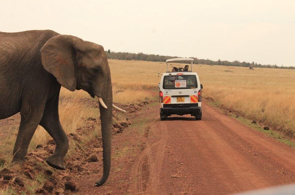 Kenya 5 Day Highlights Safari