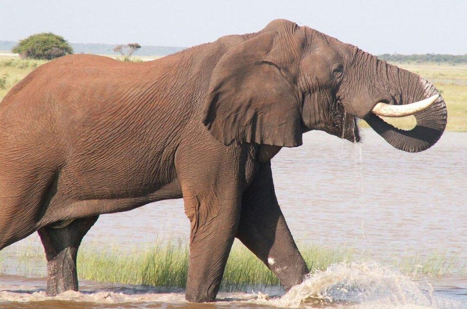 Kenya and Tanzania 10 Days Adventure Safari