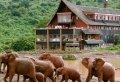 Kenya  Guided Wildlife Safari