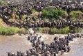 Kenya Migration Lodge  Safari