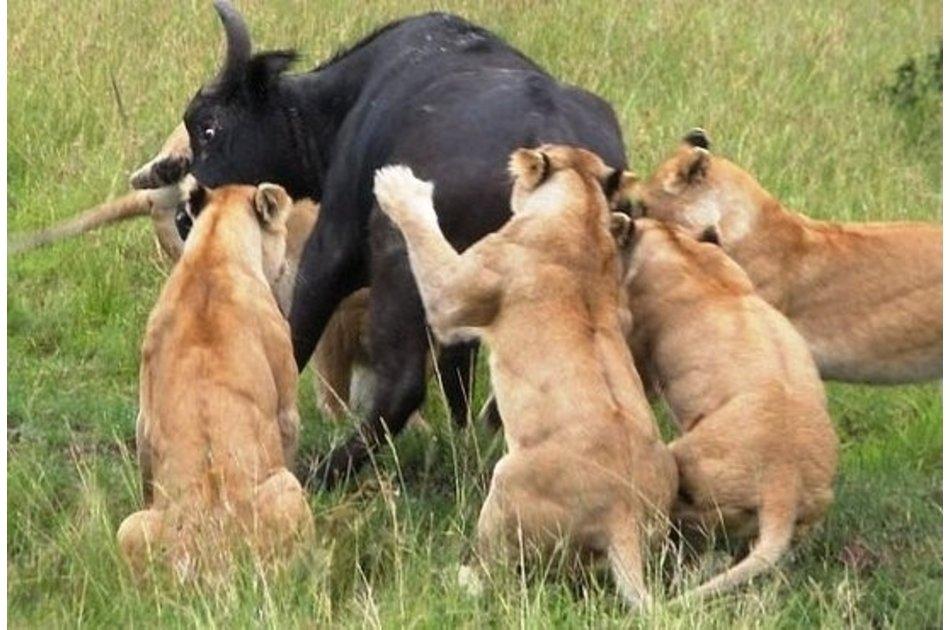Kenya Wildlife New Frontiers