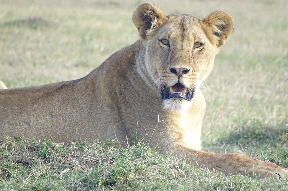 Nairobi National Park & Elephant Orphanage Day Trip