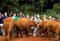 Nairobi National Park & Elephant Orphanage Half-Day Tour
