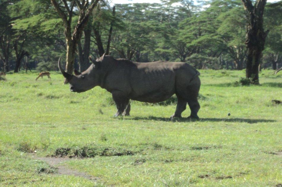 Nairobi National Park, Elephant Orphanage and Giraffe Center Tour
