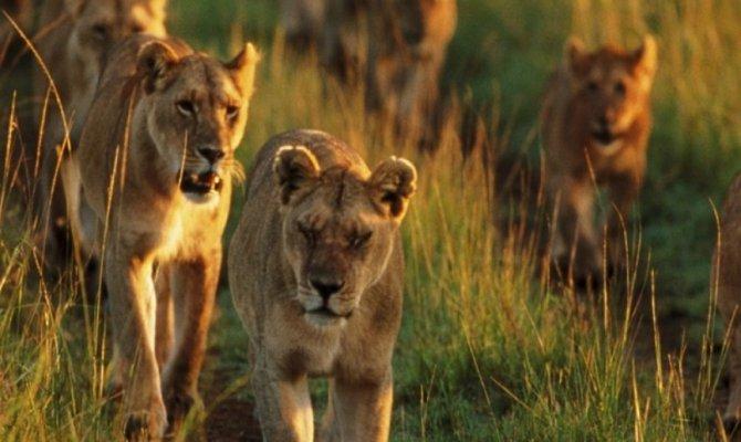 3 Days in Masaai Mara Wildebeest Migration Safari