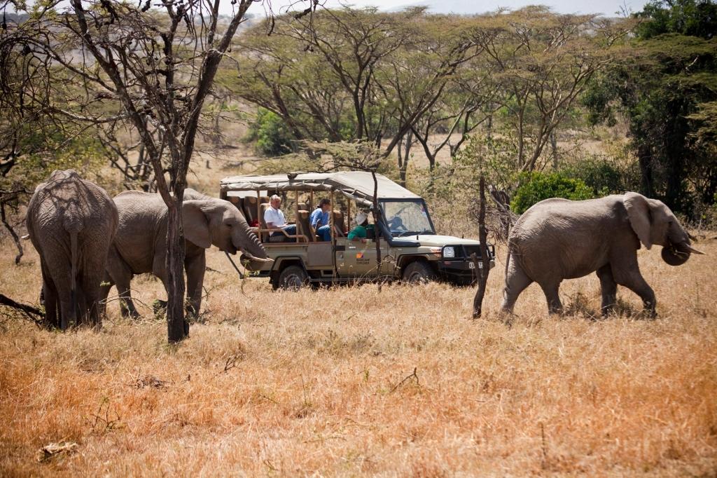 Kenya Safari to Mount Kenya and Masai Mara with Night Game drive