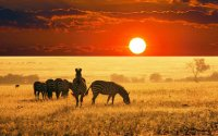7 Days 6 Nights  Tsavo West, Amboseli, Lake Naivasha & MasaiMara